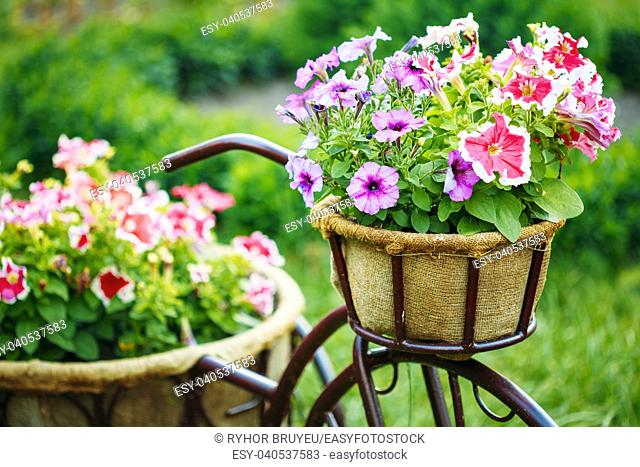 Decorative Vintage Model Old Bicycle Equipped Basket Flowers Garden. Toned Photo