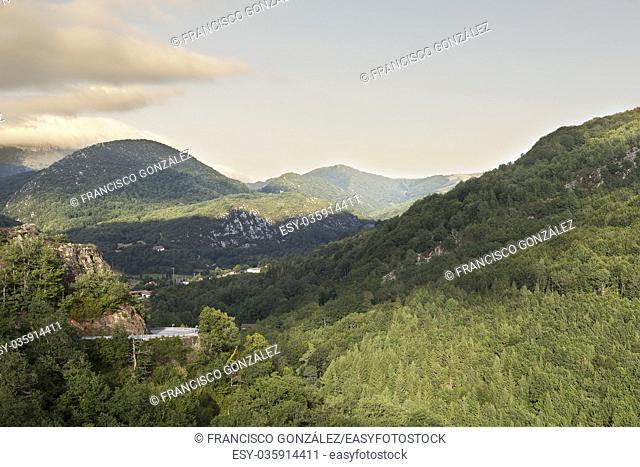 Beech forest in Navarra, Spain
