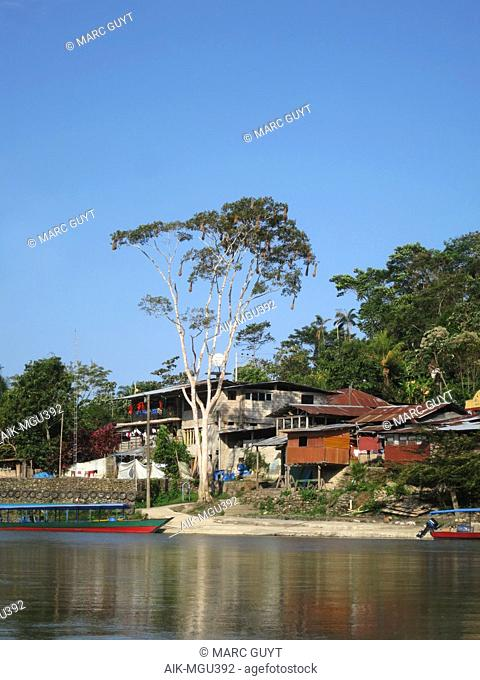 Amazonian town Atalaya near Manu national Park, Lower Amazon rainforest in Madre de Dios department in Peru. Big tree along the shore with Oropendola nests