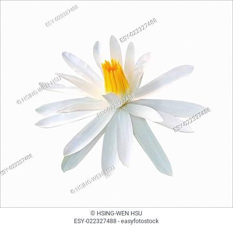 Lotus flower isolated on white background