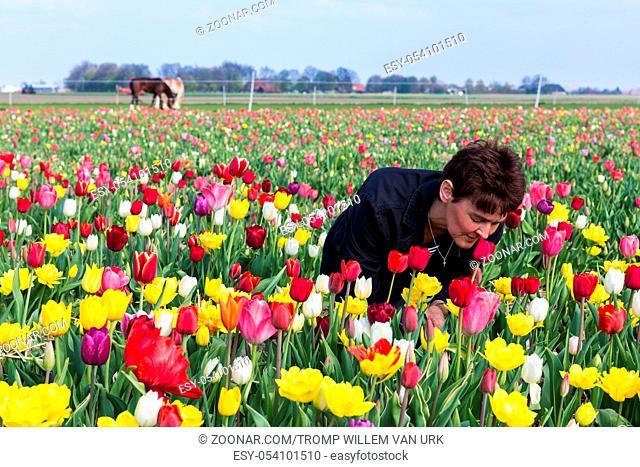 Woman smelling beautiful flowers in a Dutch tulip field