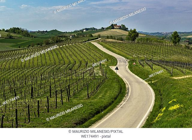 Road that passes through the green hills with vineyards and trees, on the bottom there is a house. Piedmont, Italy