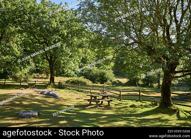 Rest area with wooden picnic benches between trees, Sierra de Urbasa, Navarra, Spain, Europe