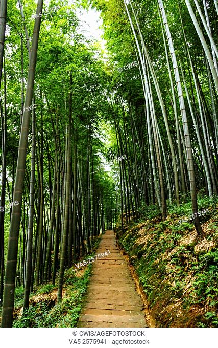 Yibin, Sichuan province, China - Beautiful view at Shunan Bamboo Sea national park