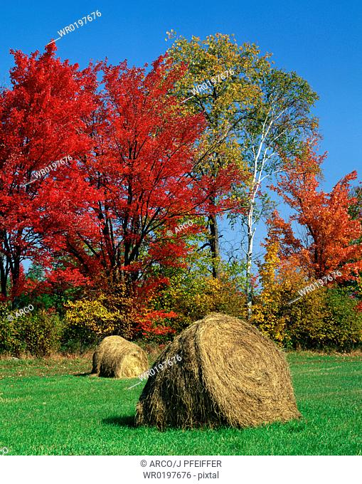 Bales, of, hay, on, meadow, in, autumn, indian, summer, New, Hampshire, USA