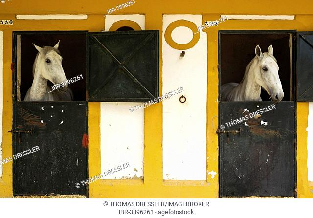 Mares in their box stalls during the Feria del Caballo Horse Fair, Jerez de la Frontera, Cádiz province, Andalusia, Spain