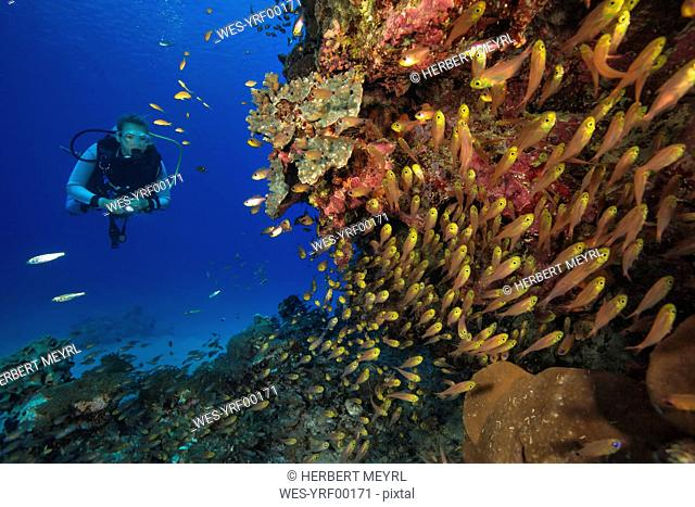 Egypt, Red Sea, Hurghada, scuba diver at coral reef