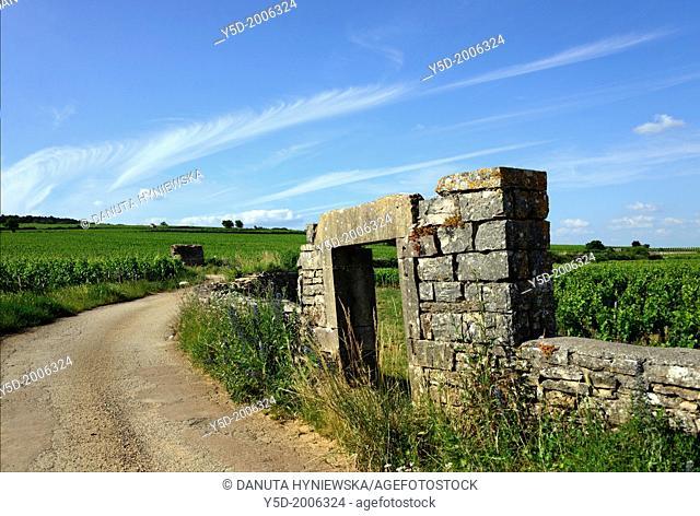 vineyards landscape, Beaune, Department of Cote d'Or, Burgundy, France, Europe