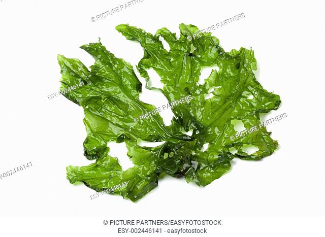 Leaf of Sea lettuce on white background