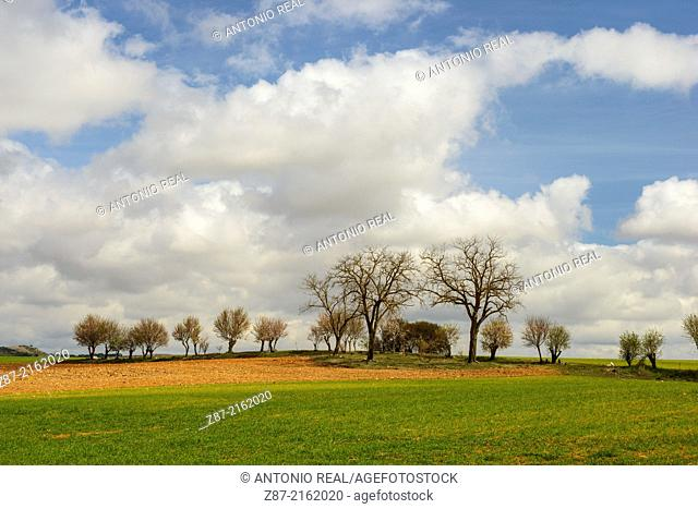 Trees and clouds, Villar de Cañas, Cuenca province, Castilla-La Mancha, Spain