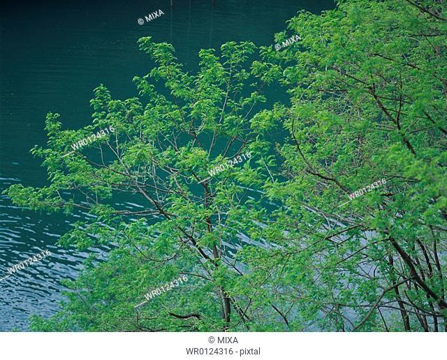 Azusa river in Nagano Prefecture, Japan
