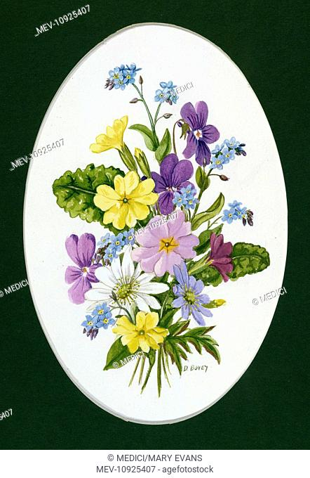 Primroses, forget-me-nots, hepatica and anemones' – in an oval