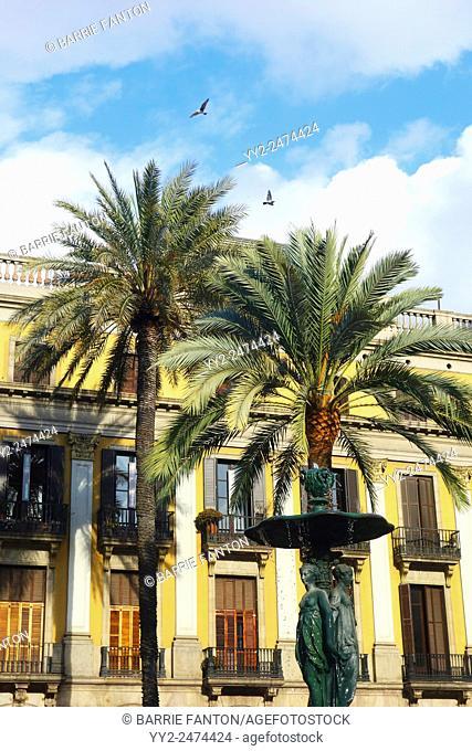 Palm Trees, Placa Reial, Barcelona, Spain