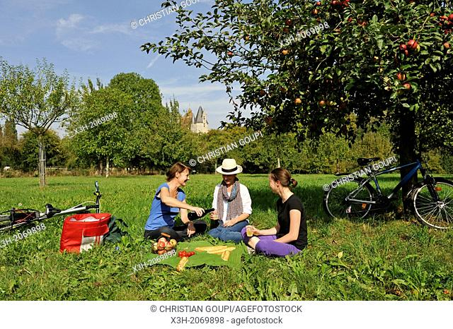 young female cyclists having a picnic in an apple orchard, around Corbon, Orne department, Lower Normandy region, France, Western Europe