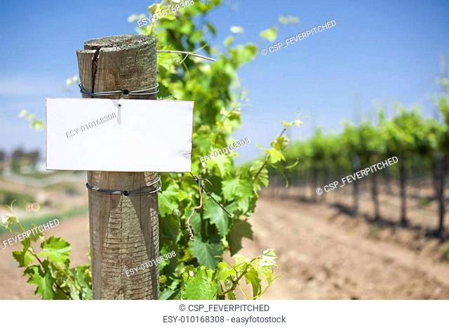 Grape Wine Vineyard with Wooden Post Holding Blank Sign