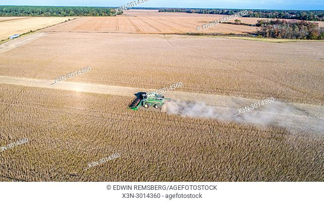 Sweeping aerial view of combine harvester driving through rows of soybeans and kicking up dust, Maryland, USA