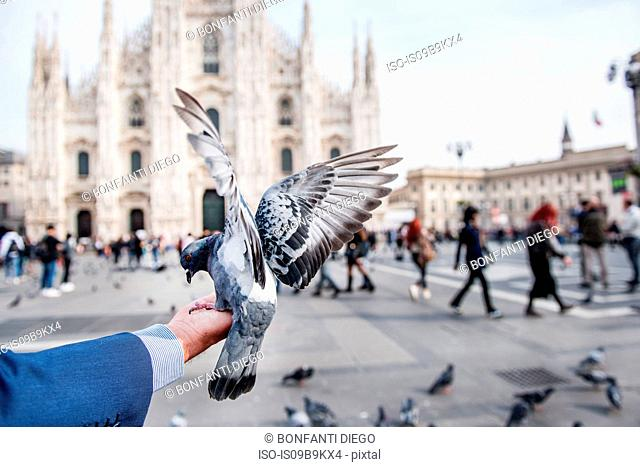 Man feeding pigeon on hand in square, personal perspective, Milan, Lombardy, Italy