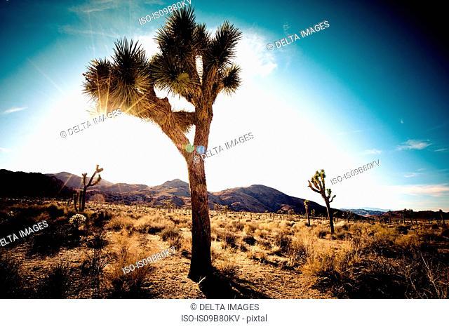 Hidden Valley, Joshua Tree National Park, California, USA