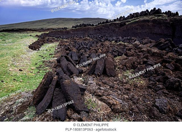 Peat extraction in bog / moorland showing piles of harvested peat drying to be used as traditional fuel, Shetland Islands, Scotland, UK