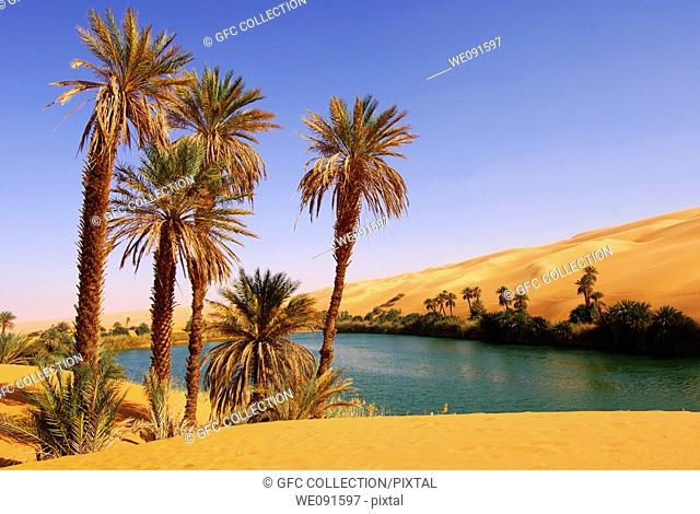Palm trees on the bank of the Um el Maa lake in the Awbari sand sea, Sahara desert, Libya