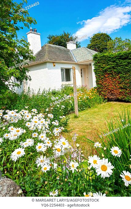 Pretty white house and meadow of daisies in Scotland