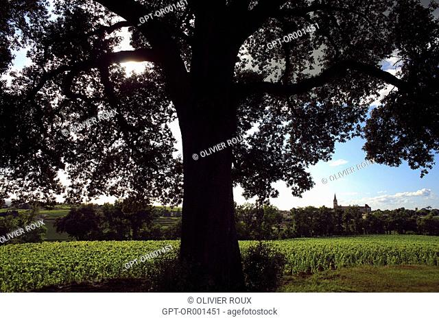 VINEYARD AND VILLAGE OF SAINT-EMILION WITH THE HANGING TREE IN THE FOREGROUND, SAINT EMILION, (33) GIRONDE, AQUITAINE, FRANCE