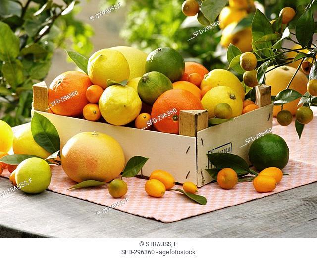 Assorted citrus fruit in box
