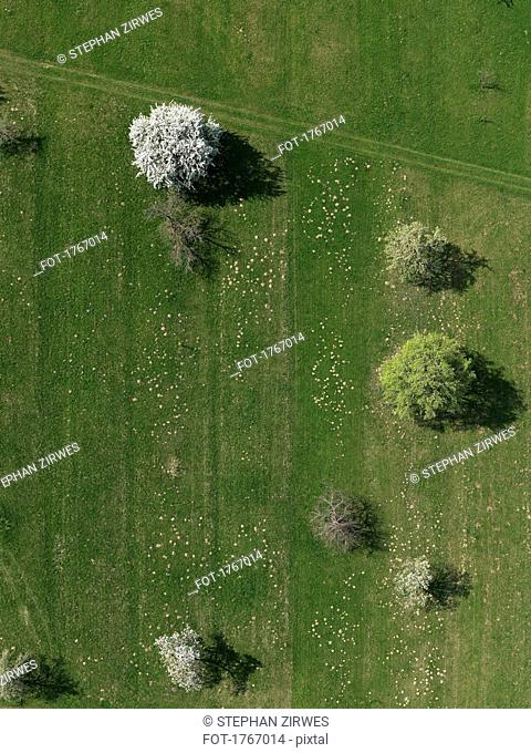Aerial view rural green field and trees, Hohenheim, Baden-Wuerttemberg, Germany