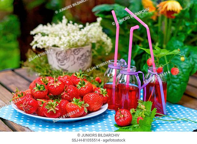 Strawberry (Fragaria x ananassa). Ripe fruit on a table in a garden and juice in small bottles. Germany