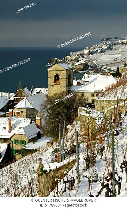 Municipality of Saint-Saphorin between snow-covered vineyards and Lake Geneva, Lac Leman, in the UNESCO World Heritage Region of Lavaux, Switzerland, Europe