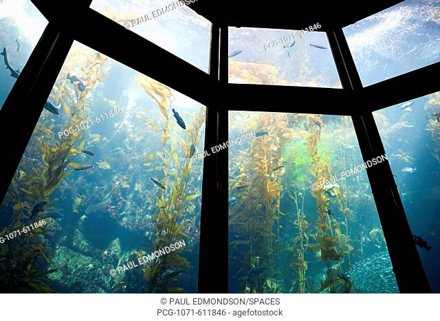 Monterey Bay Aquarium, Monterey, California, CA