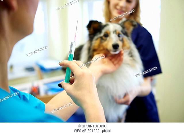 Dog receiving an injection in veterinary surgery