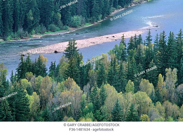 Aspen trees and pines in early fall along the banks of the Snake River, Grand Teton Nat'l  Pk , WYOMING
