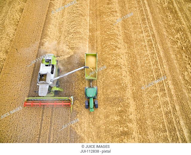 Overhead aerial view of combine harvester filling tractor trailer in golden barley field