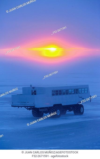 Polar bear viewing, Churchill, Hudson Bay, Manitoba, Canada, America