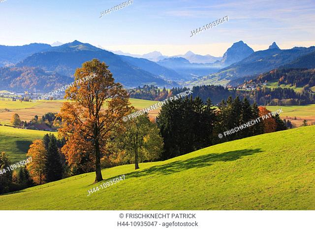 View, view, Etzel, tree, mountain, mountain panorama, mountains, mountain panorama, trees, Einsiedeln, mountains, Grosser Mythen, autumn, autumn colors