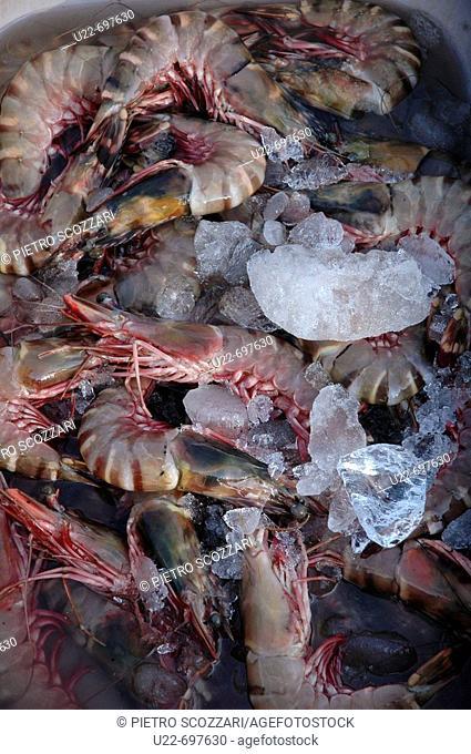 Chapora, Goa India: shrimps sold at the fish market