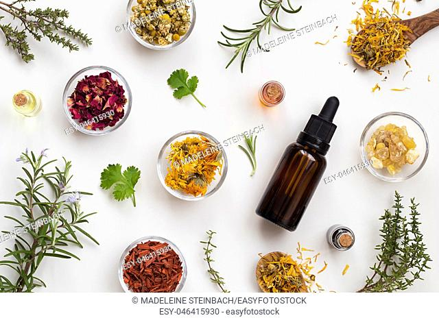 Bottles of essential oil with fresh thyme, cilantro, blooming rosemary, frankincense resin, dried calendula, chamomile, rose petals and sandalwood on a white...