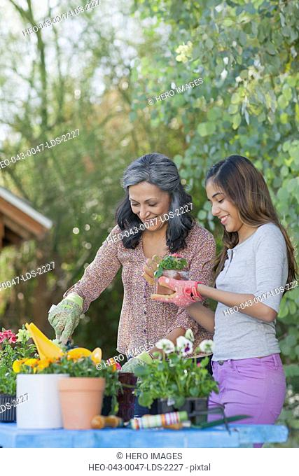 hispanic mother and daugher doing some repotting together