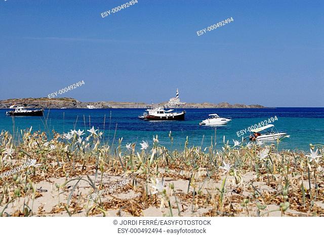Cabo y faro de Favàritx desde Cala Tortuga  Menorca, Balears, Spain, Europe