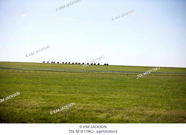 A string of racehorses walking along the gallops, Newmarket