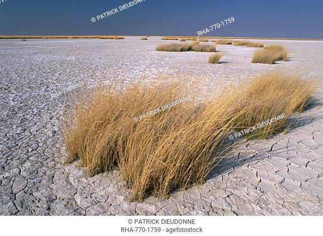 Salt pans in Magkadikgadi Pan National Park, the Makgadikgadi Pan is the largest salt flat complex in the world covering 16000 square kilometers