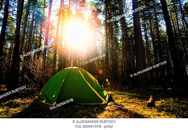 Tent pitched in forest