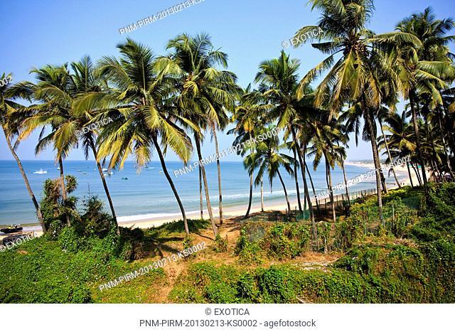 Palm Trees on the coast, Candolim Beach, Candolim, North Goa, Goa, India