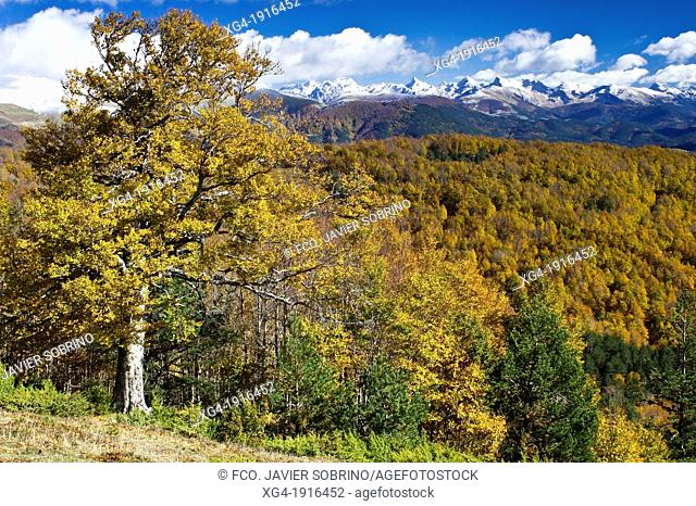 Linza and Zuriza summits from the Sierra de Abodi in autumn - Pyrenees - Navarra - Spain - Europe