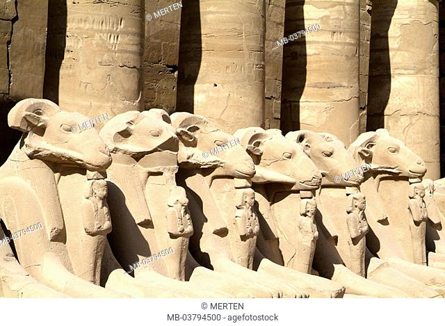 Egypt, Luxor, Karnak, Amun-Tempel,  Widdersphingen  Africa, head Egypt, sight, destination, temple installation, Amun temples, Karnak-Tempel, sanctuary, ruin