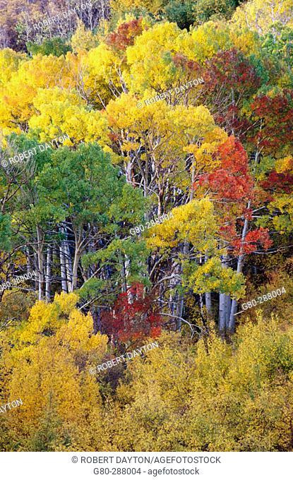 Fall. Eastern Sierras. California. USA