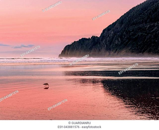View of Manzanita Beach on the Pacific Coast of Northern Oregon. Birds are walking and flying. Pastel pink sky reflecting on the wet sand at sunrise