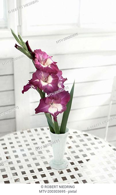 Gladiolus flowers in vase on table at glass house, Bavaria, Germany