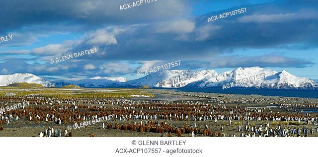 Large colony on penguins with scenic mountain backdrop in the South Georgia and the South Sandwich Islands